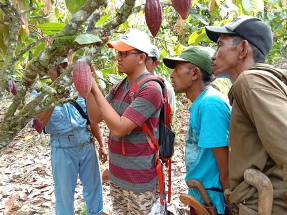 Pendampingan Petani Kakao. Foto: Balittri Litbang Pertanian