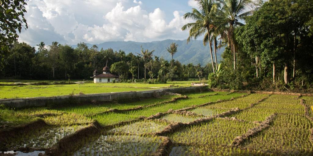 Mentan, Syahrul Yasin Limpo mengharapkan lumbung pangan dibuat hingga ke desa atau kelurahan agar stok pangan selalu tersedia |Shutterstock
