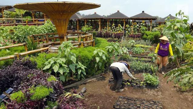 Petani menyiapkan bibit sayur yang dikelola BUMDes Pujon Kidul di Pujon, Malang. Foto: Liputan6.com/Johan Tallo