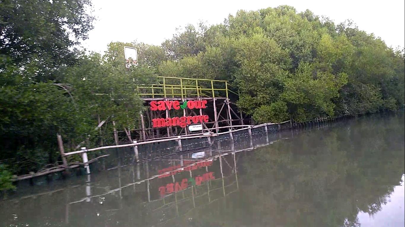 Kenampakan hutan mangrove dari luar | Foto: Dok. pribadi