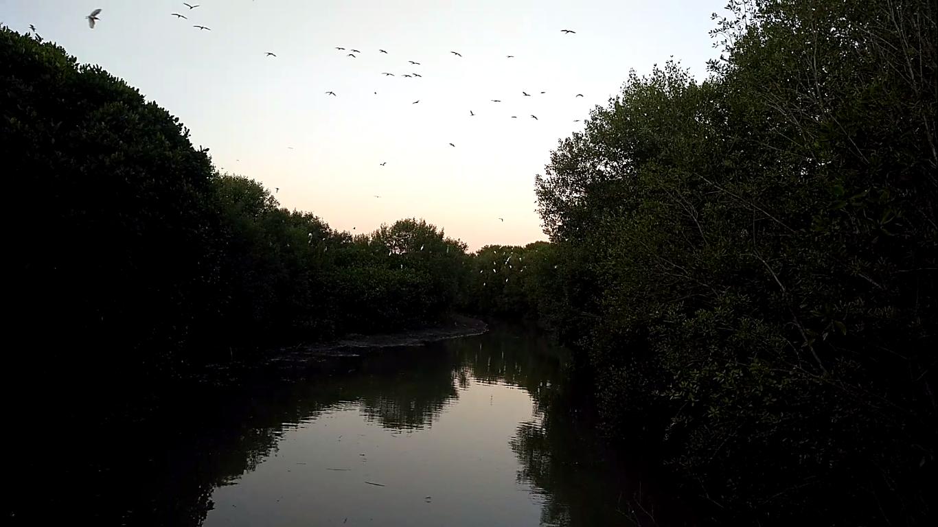 Menikmati burung-burung yang berterbangan diantara pohon mangrove | Foto: Dok.pribadi