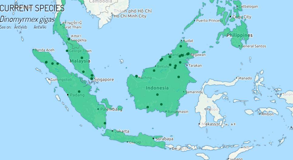 Wilayah hijau adalah habitat bagi Dinomyrmex gigas/