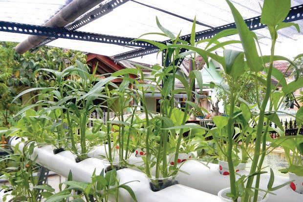 Urban framing atau pertanian kota di Jakarta meningkat selama Pembatasan Sosial Berskala Besar (PSBB). Foto: SINDOnews