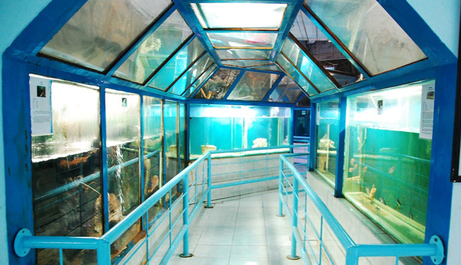 Sea World mini yang dikelola PPN Pekalongan.