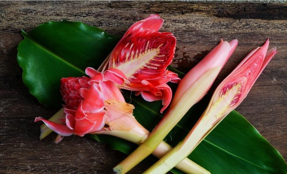 Manfaat Kecombrang Bumbu Masak Dengan Aroma yang Khas | Foto: indoblognet.com