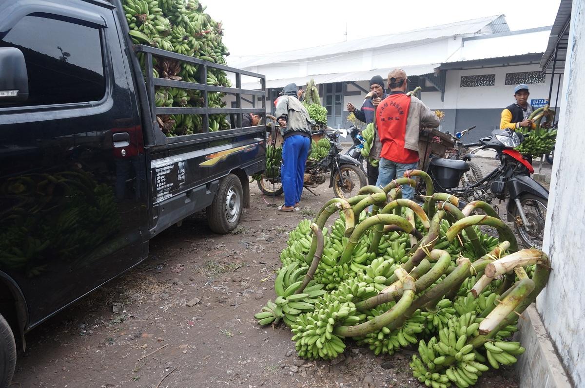 Berbagai varian pisang bisa ditemui di pasar tradisional Klakah, Lumajang.