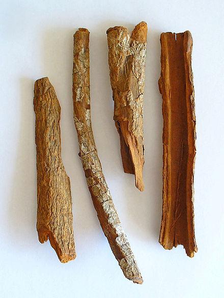 Kulit kayu pihon kina, digunakan sebagai obat malaria (wikipedia)