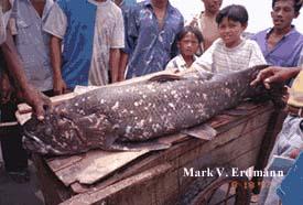 Temuan ikan Coelacanth pertama.