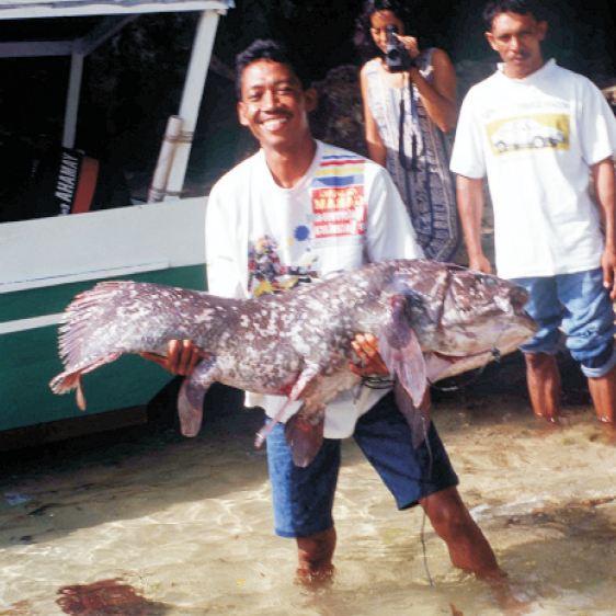 Ikan purba Coelacanth setelah ditangkap.