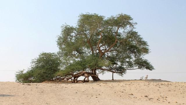 Pohon Shajarat Al-Hayat.