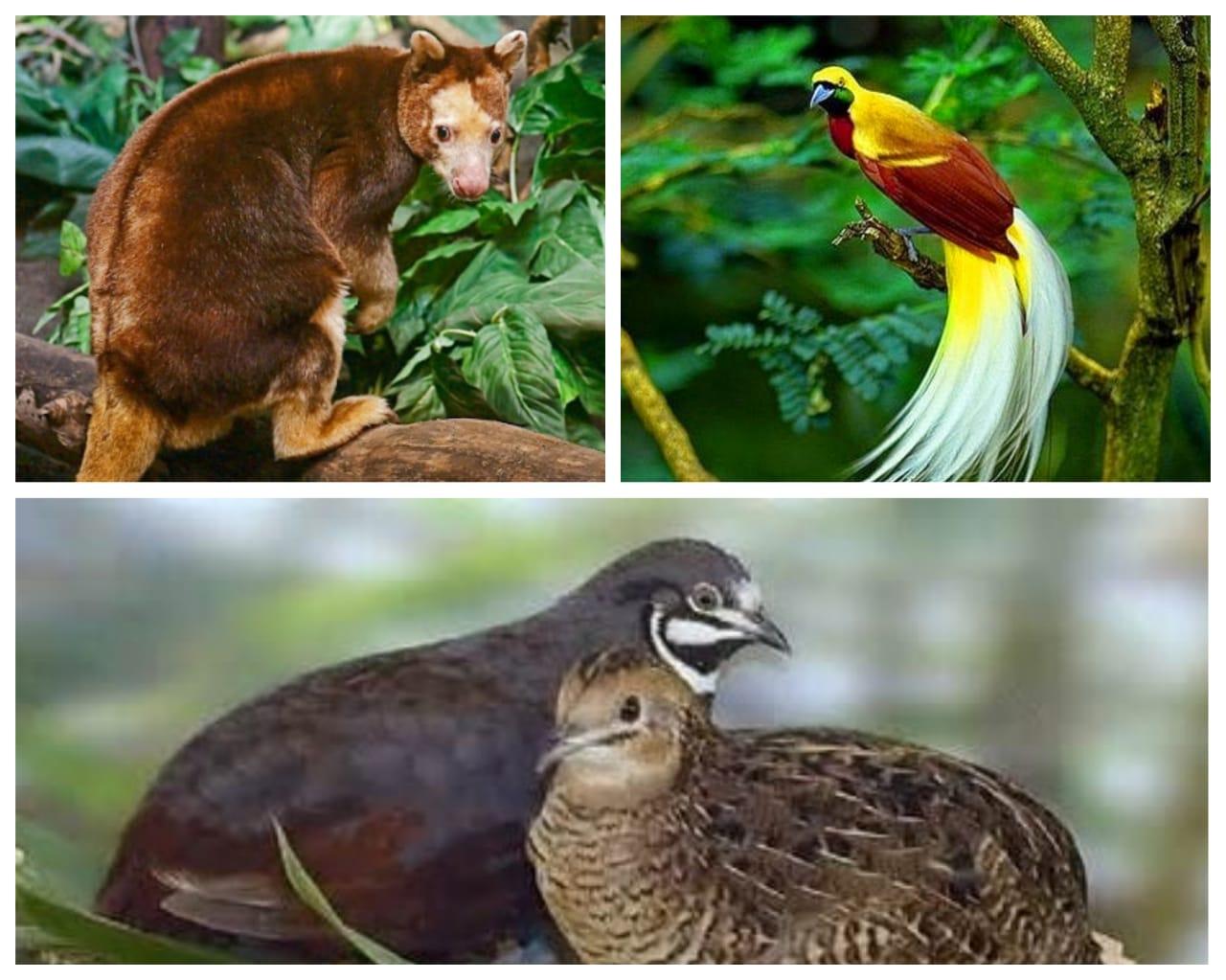 satwa langka Papua