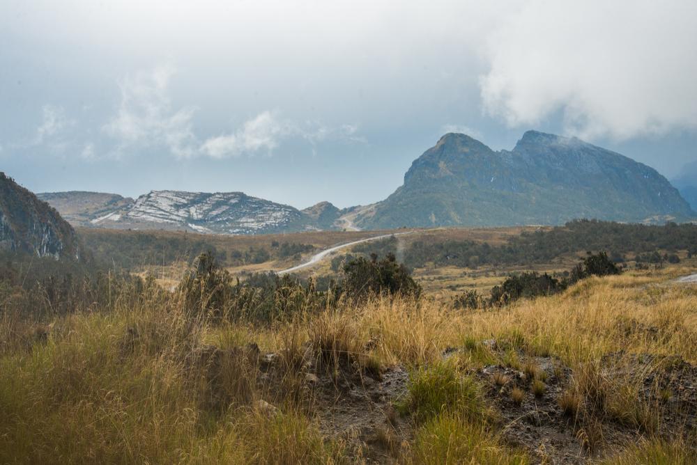 Ragam vegetasi Taman Nasional Lorentz