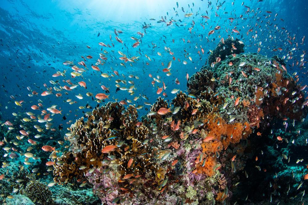 Biota laut TWAL Teluk Maumere