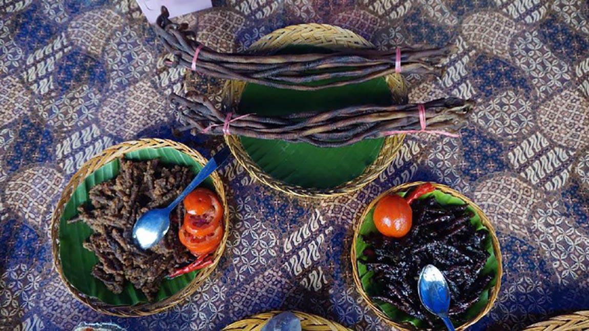 cacing laut papua