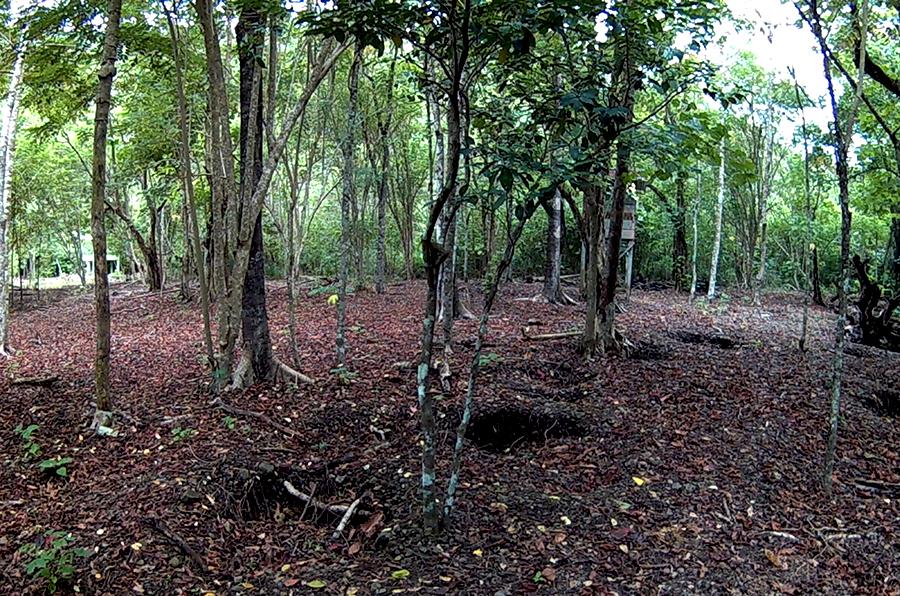 Lokasi peneluran maleo yang harus dijaga, agar tidak diganggu predator terlebih manusia yang ingin mengambilnya. Foto: Hanom Bashari