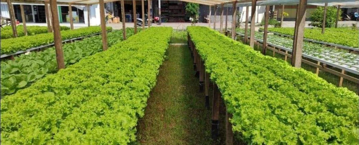 Kebun hidroponik yang dipenuhi sayuran yang siap panen. (sumber : facebook Rudy Adam)