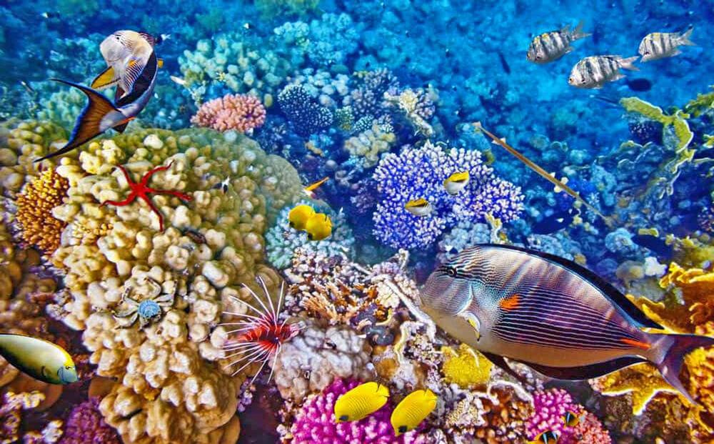 Cagar Biosfer Bunaken