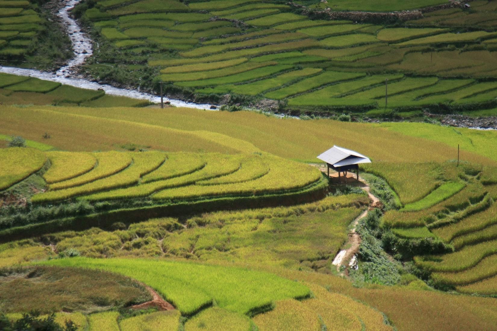 Hamparan Sawah di Mu Chang Chai, Vietnam @ unsplash.com