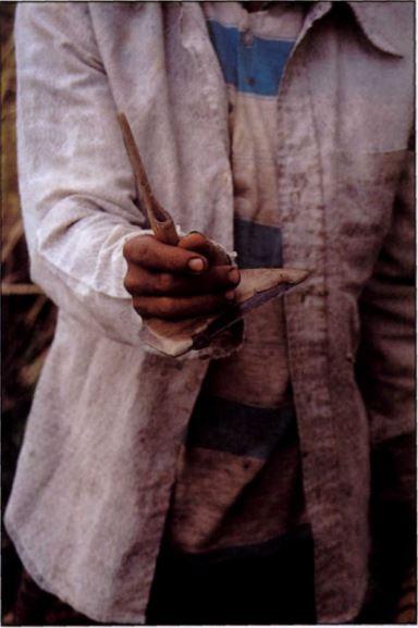 Ani-ani yang dipegang seorang petani.