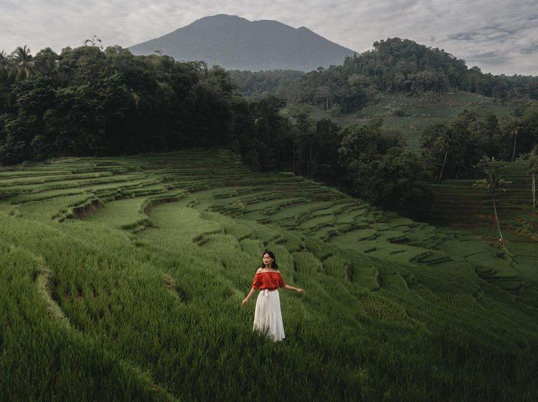 Hamparan sawah padi yang begitu eksotis, Ciboer Pass punya © Instagram @trysapuri