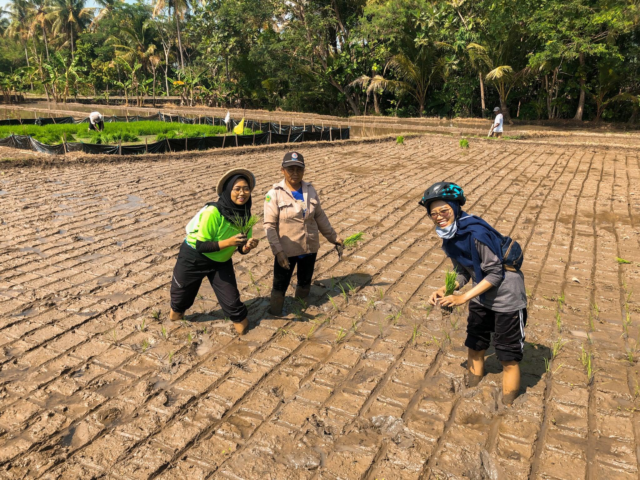 SAMOA ikut menanam padi bersama petani di Nanggulan