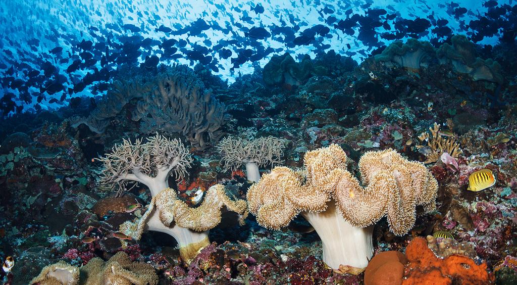 Keindahan Bawah Laut di Negeri Akoon, Nusalaut, Kabuapten Maluku Tengah | Foto: Ludovic dari flickr