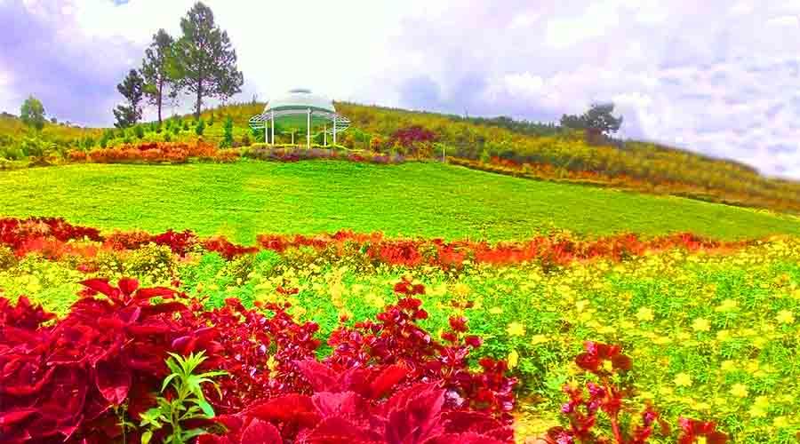 Hamparan taman bunga di Sapo Juma | Foto: Eljohnnews