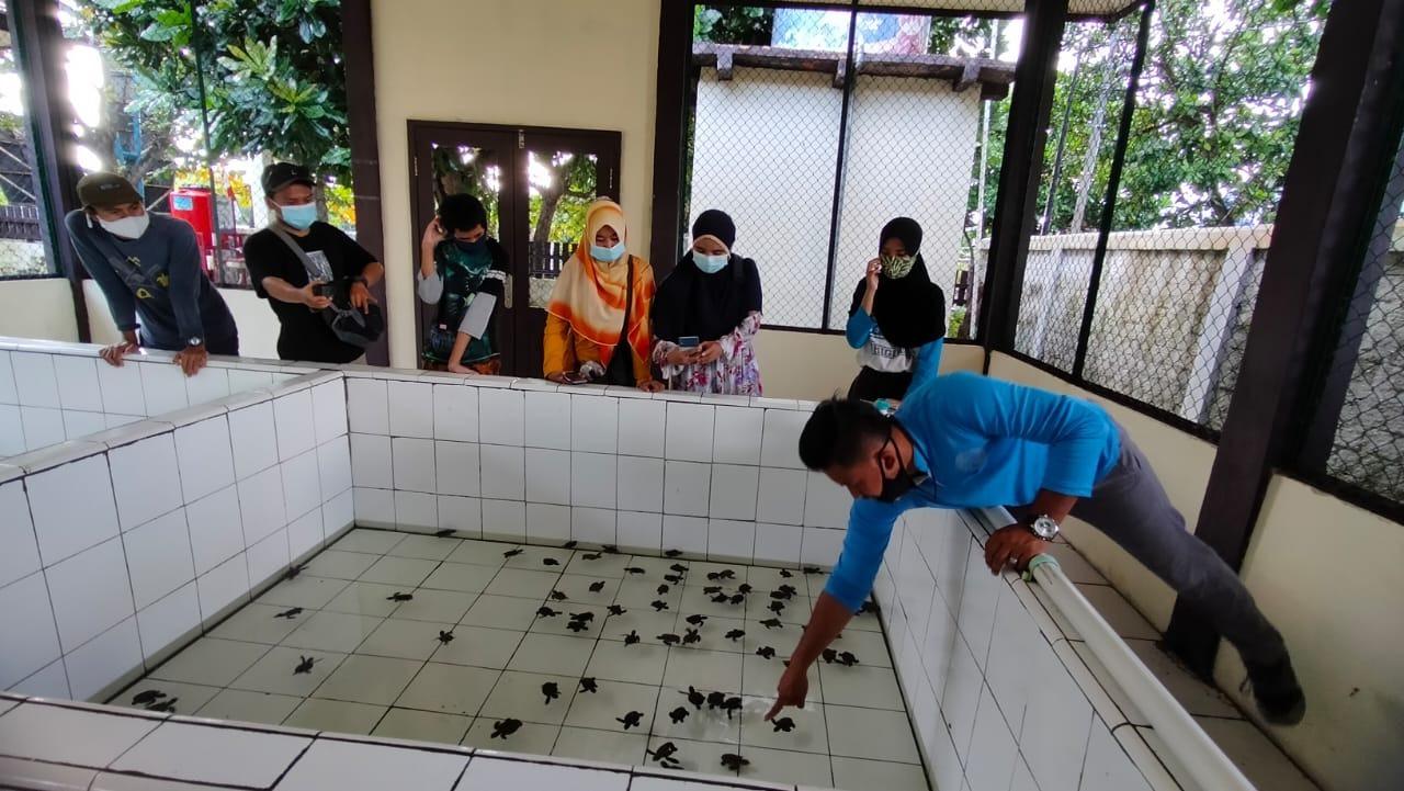 Penangkaran Penyu   Foto: Dok. Pribadi