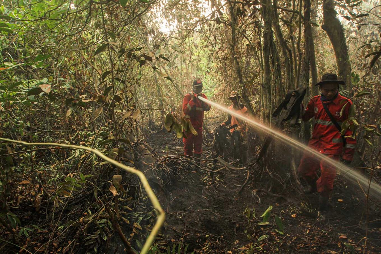Petugas pemadam kebakaran Indonesia memerangi kebakaran hutan lahan gambut di Ogan Ilir, Sumatera Selatan