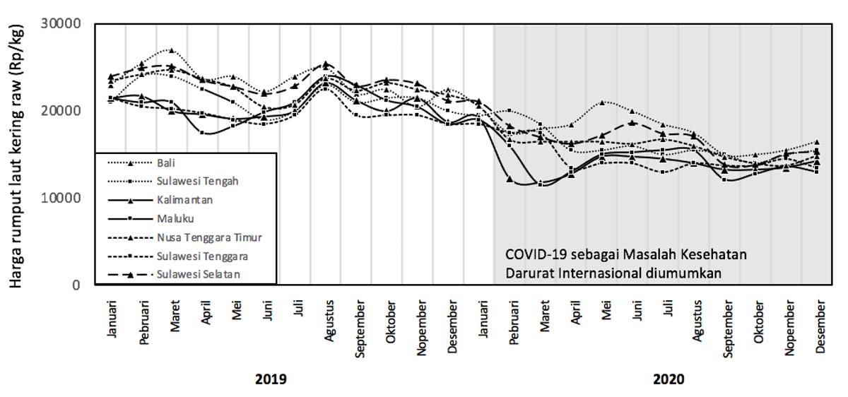 Harga beli cottonii kering (Kappaphycus alvarezii) di seluruh Indonesia turun rata-rata 27% dari Januari hingga Desember 2020 | Jasuda