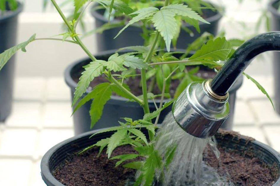 Menyiram tanaman   Foto: Grid.id