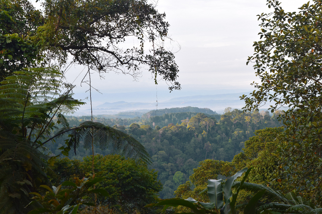 Untuk menjaga keberlangsungan surili, maka Taman Nasional Gunung Gede Pangrango (TNGGP) dipilih sebagai tempat perlindungan habitat surili. © Selsa Artika Ayujaya/Shutterstock