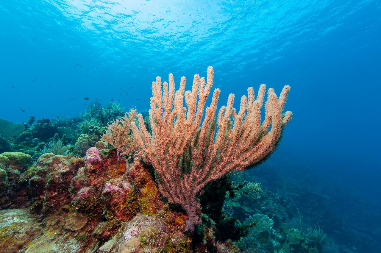 Program COREMAP diharapkan mampu mengelola dan merebhabilitasi terumbu karang Indonesia di tengah ancaman kerusakan. © Jesus Cobaleda/Shutterstock
