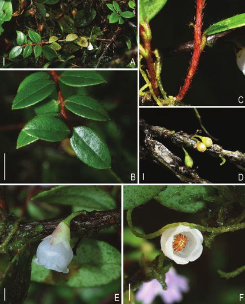 Spesies endemik baru di Sulawesi