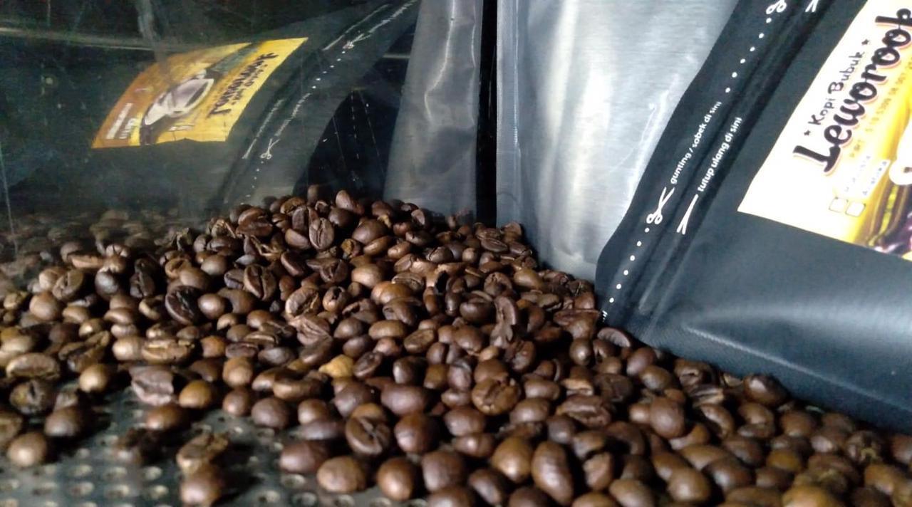 Biji kopi robusta yang merupakan jenis kopi Leworook