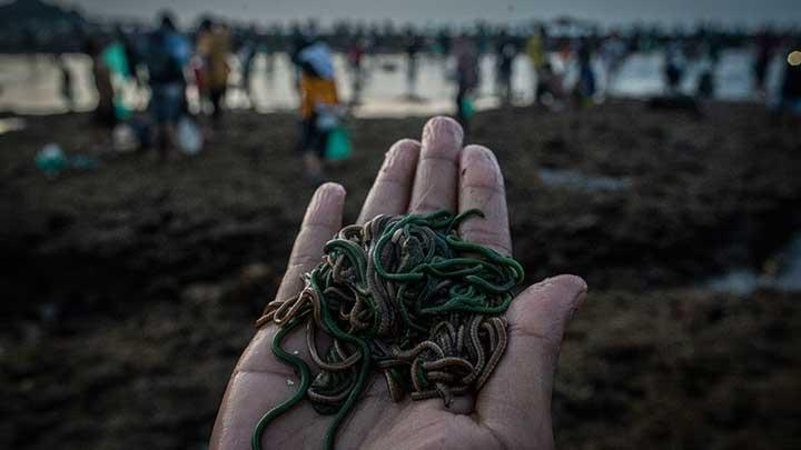 Potret Nyale | Foto: tempo.co