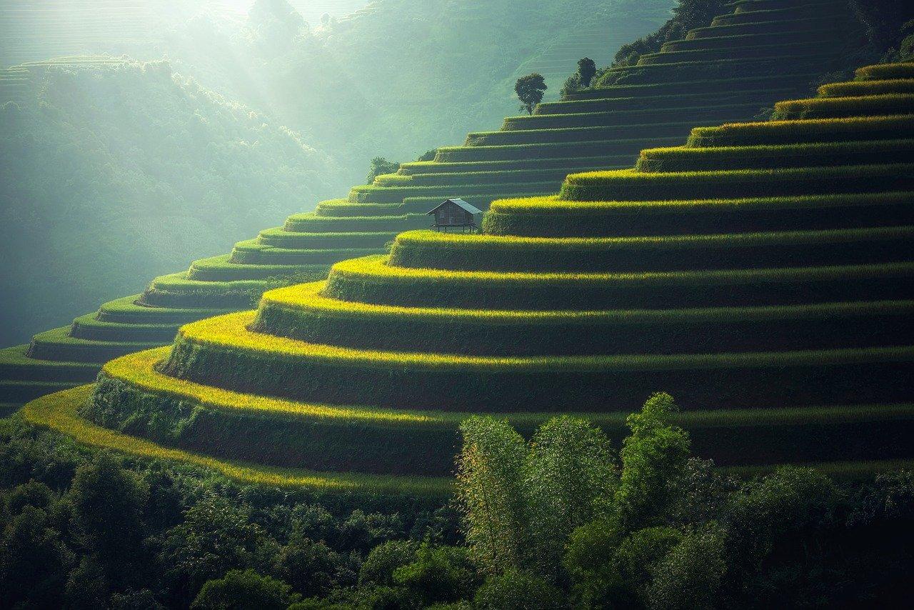 Terasering di Bali   @Sasin Tipchai Pixabay