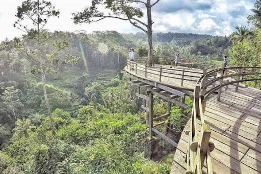 Bali Pulina | Foto: Punapibali