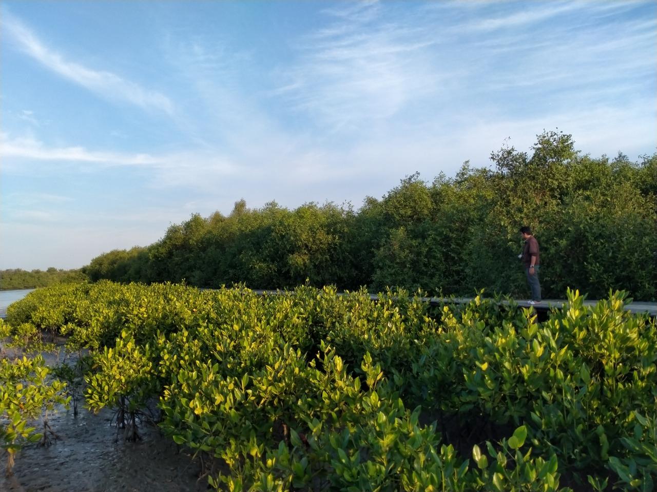 Ilustrai hutan mangrove