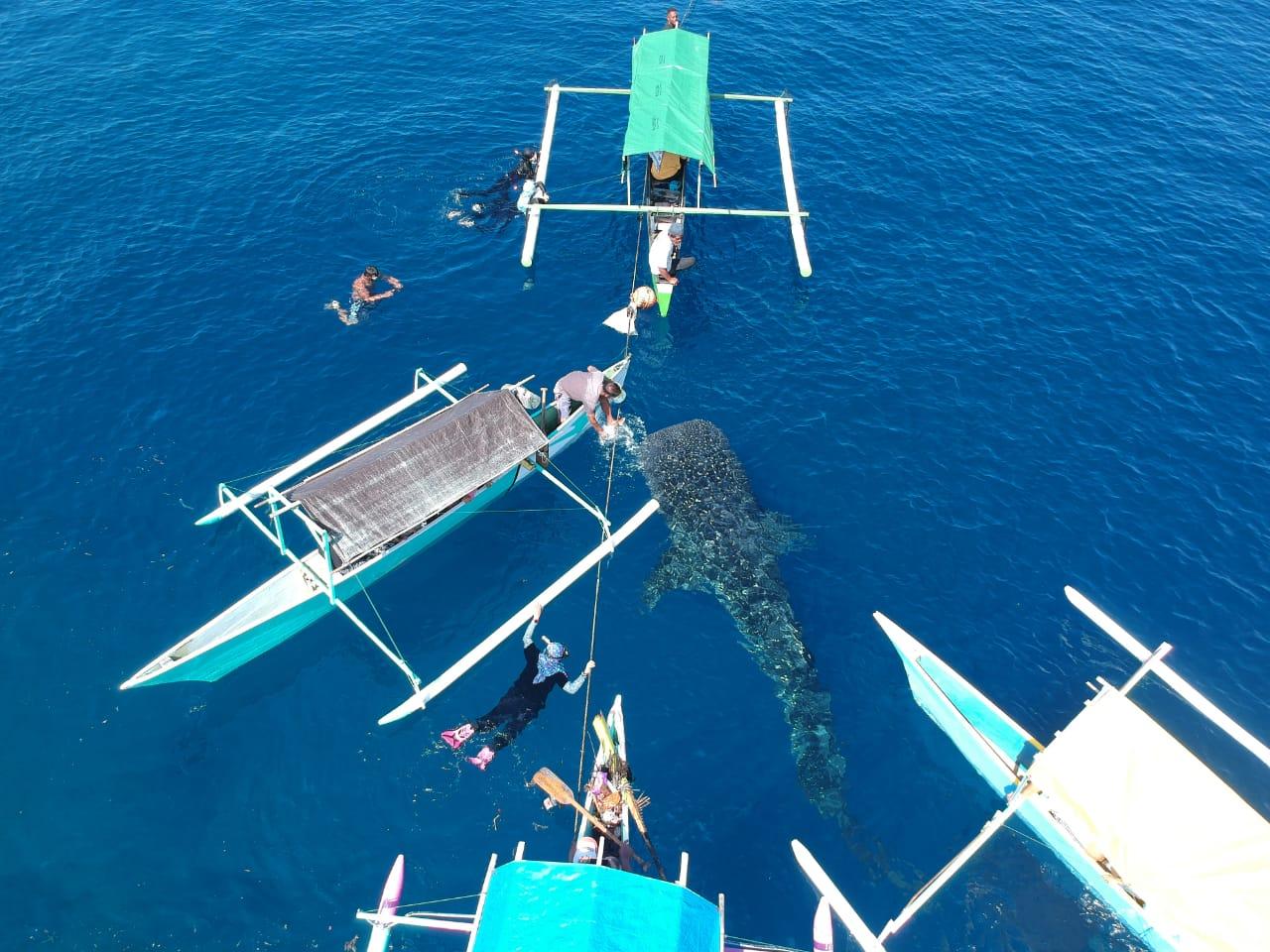 Kehadiran hiu paus di pantai Botubarani, Gorontalo beberapa waktu lalu yang menjadi daya tarik wisatawan lokal maupun mancanegara