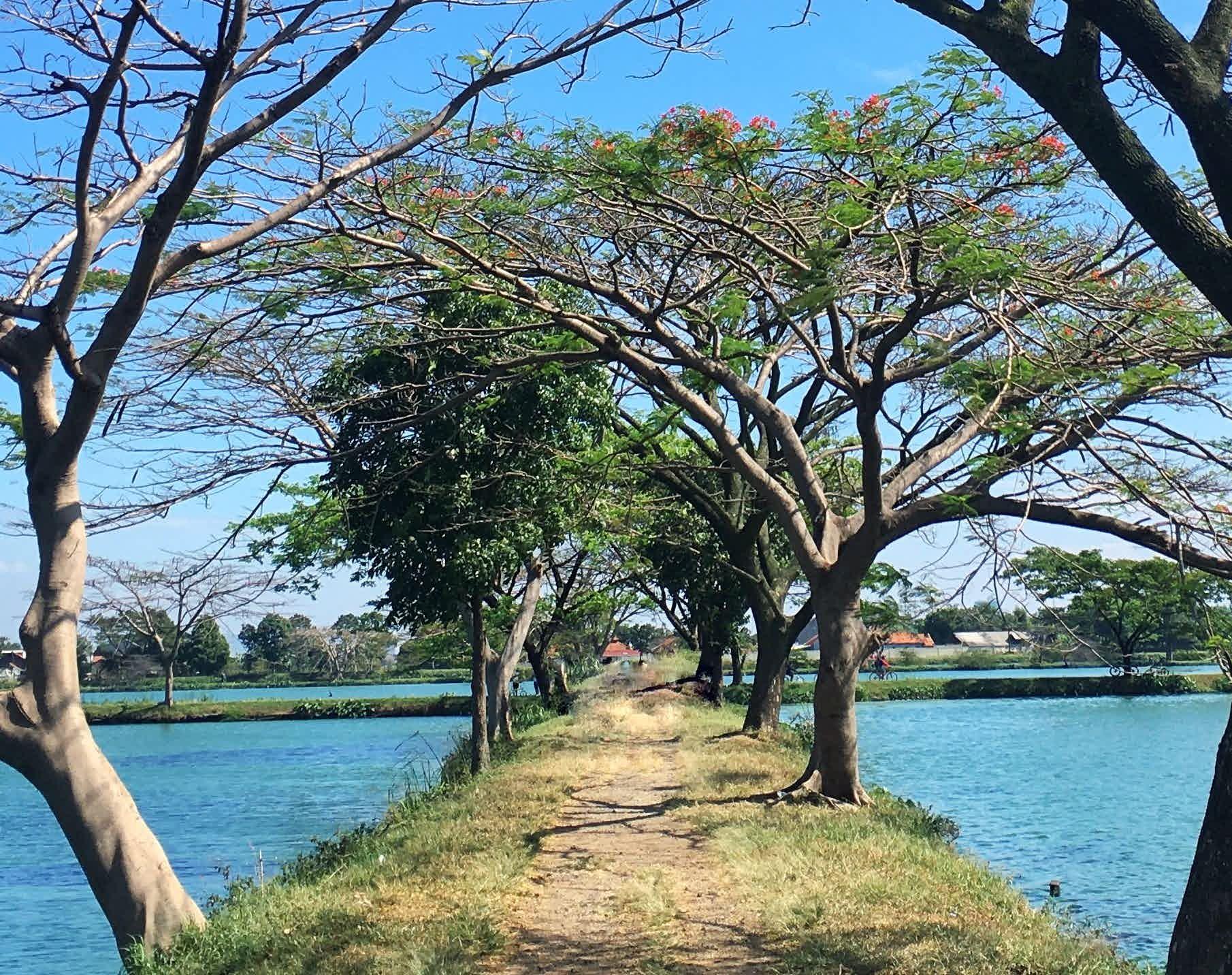 Pengunjung bisa melihat pepohonan di komplek danau IPAL Bojongsoang