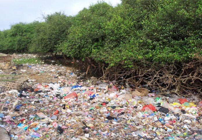 Sampah di hutan mangrove