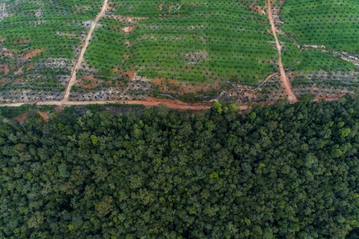 Sawit dan hutan hujan di sekitar kawasan Proyek Tanah Merah, 2017