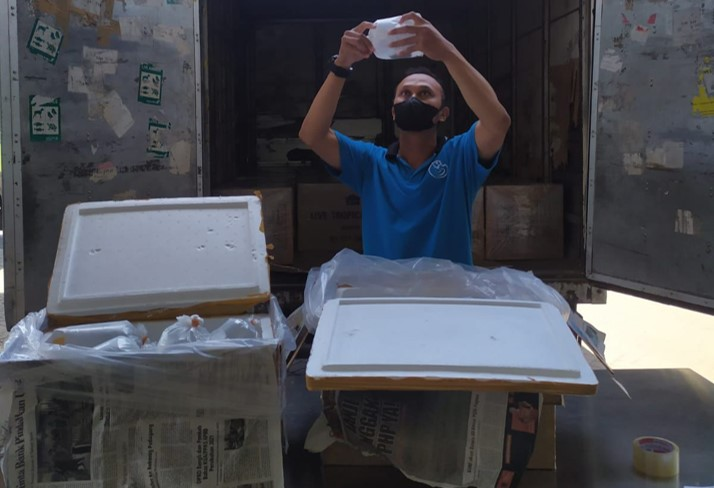 pengiriman ikan hias untuk diekspor