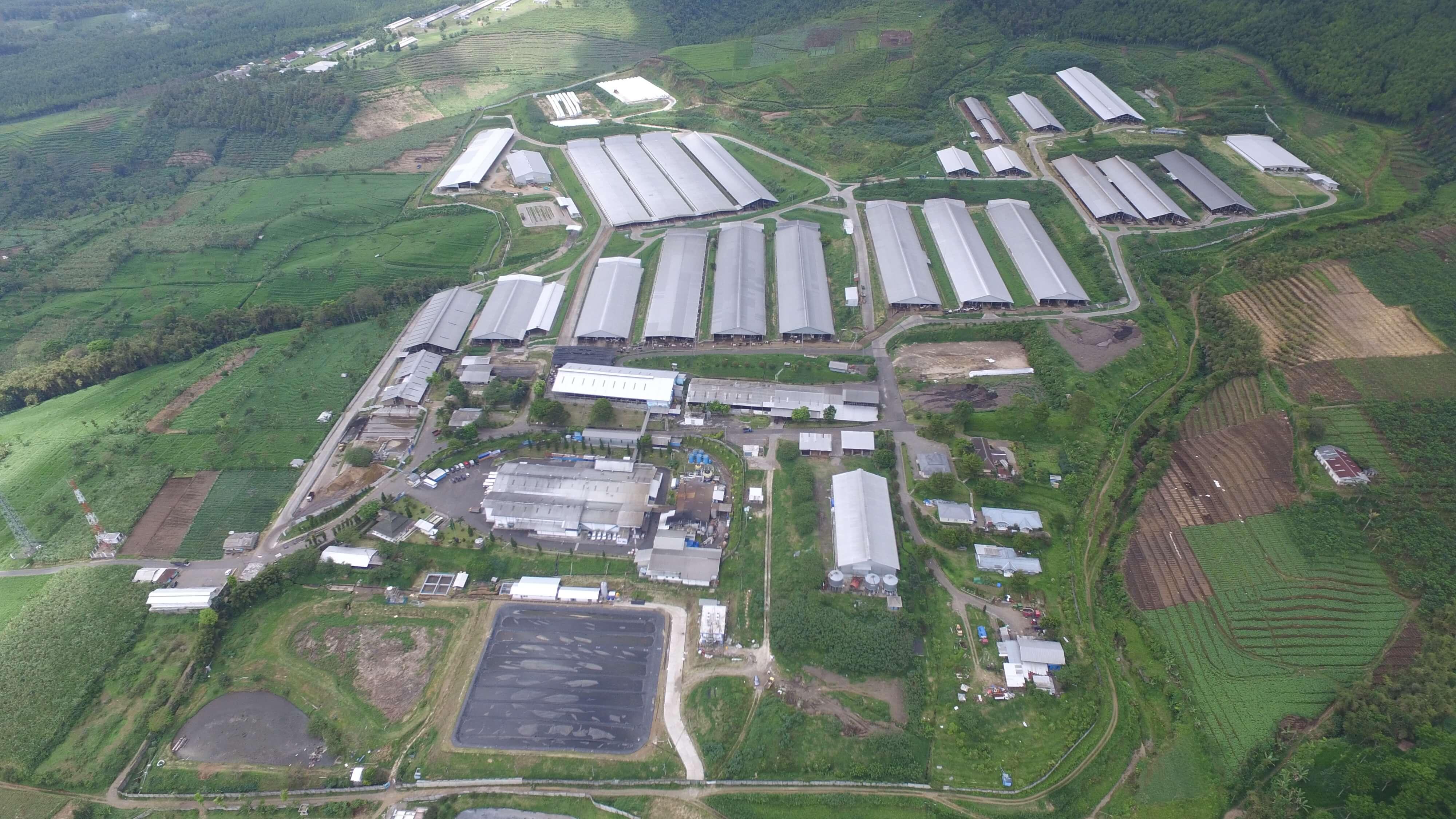 Peternakan dan pabrik Greenfields