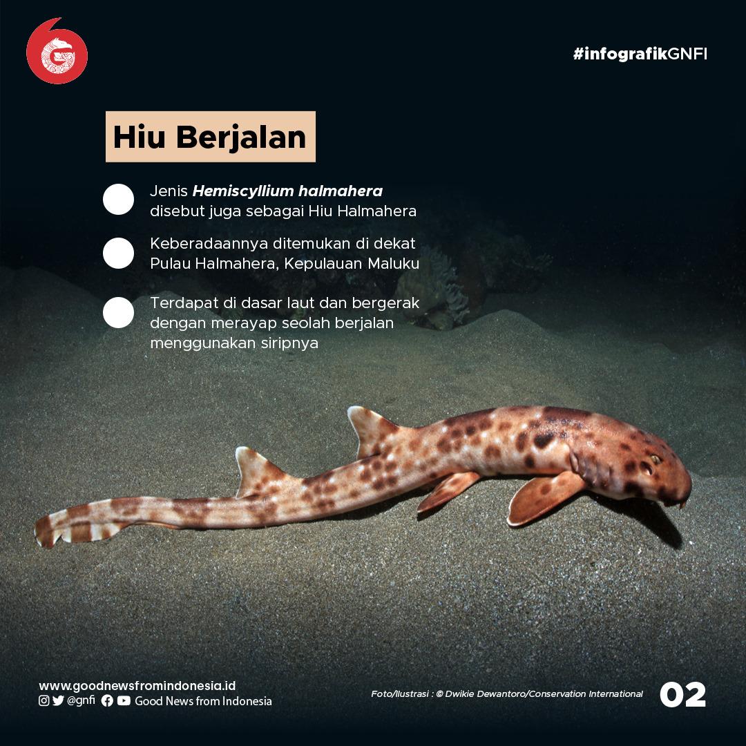 Deretan Hewan Laut Unik yang Ada di Perairan Indonesia
