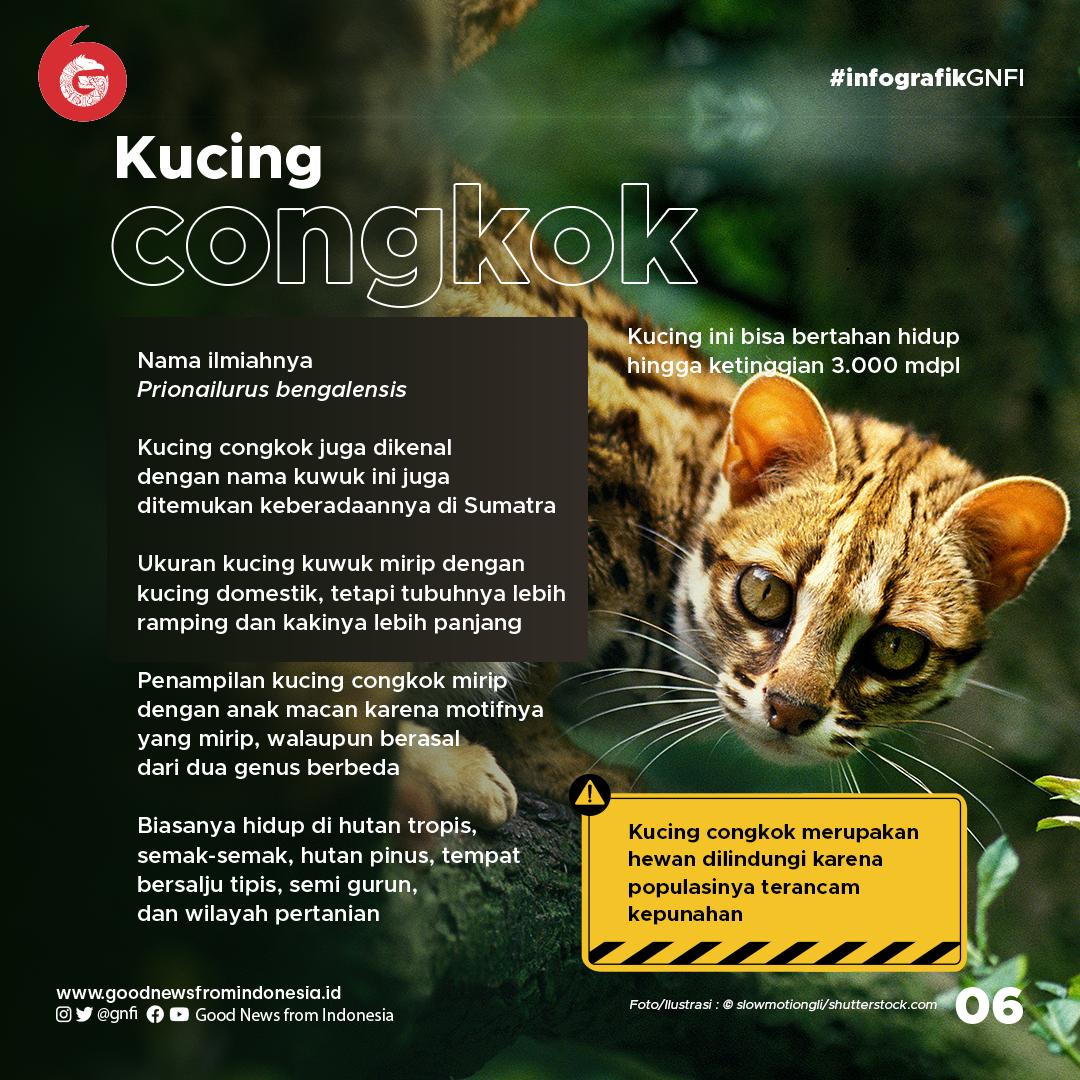Mengenal 5 Kucing Hutan Eksotis Sumatra
