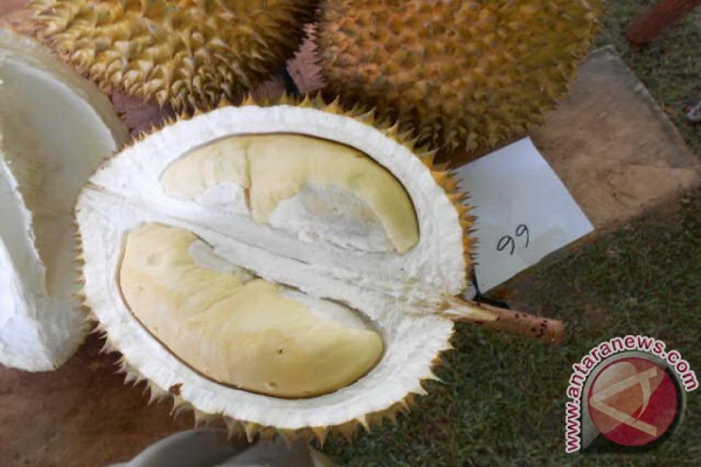 10 Jenis Durian Indonesia yang Menggoda Lidah