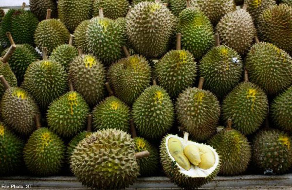 10 Jenis Durian Indonesia yang Populer