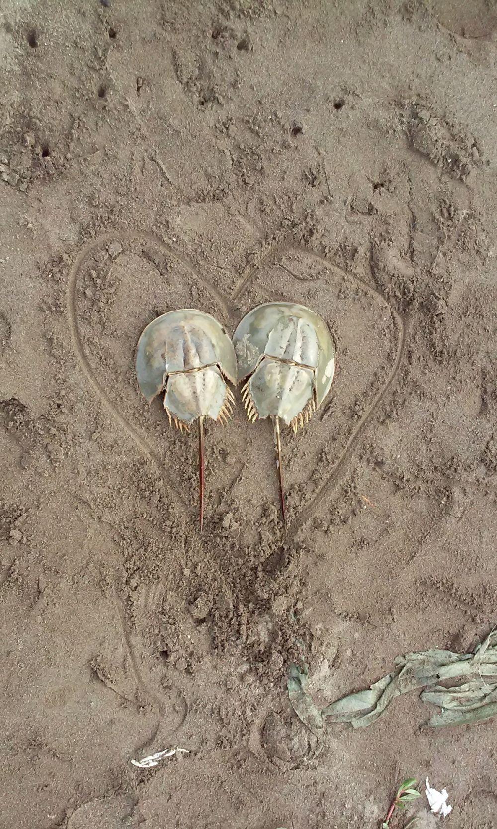 Romantisnya